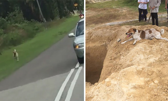 連れていかれちゃう!飼い主の遺体の入った車を全力で追いかけてきたものは、故人の最愛の犬だった(マレーシア)