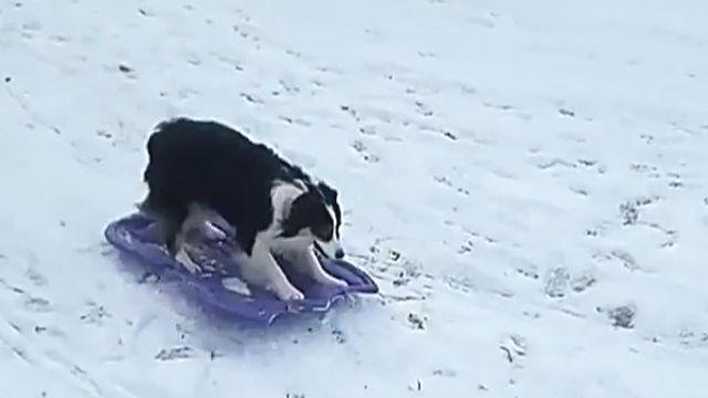 sled-doga