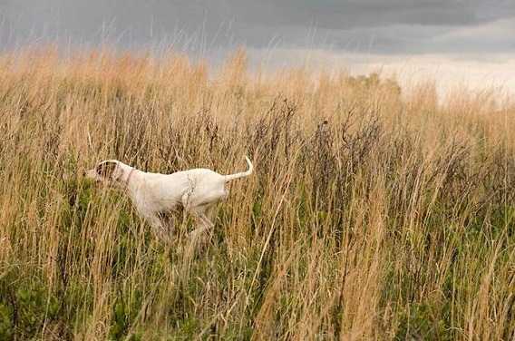 old_dogs_26