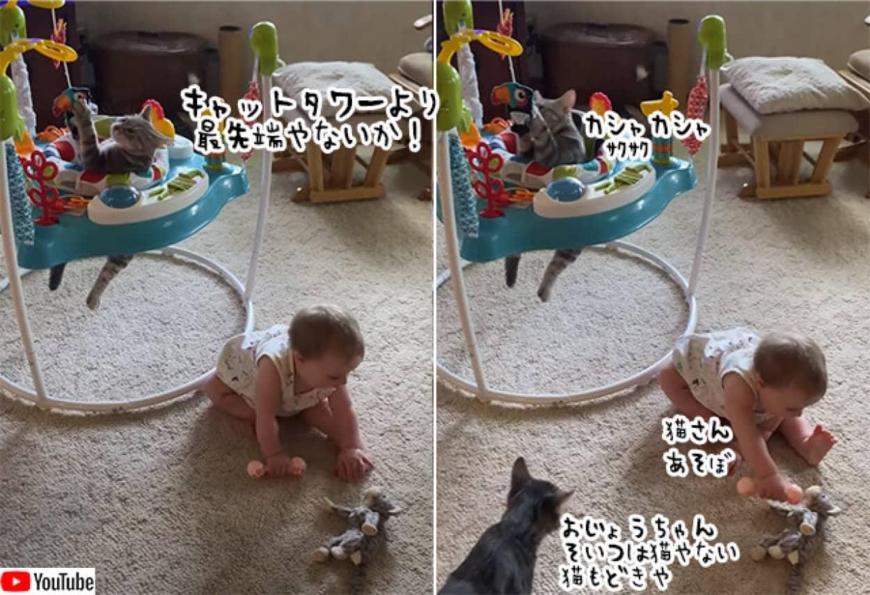 ベビージャンパーで遊び倒す猫