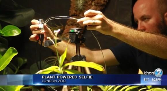 plant3_e
