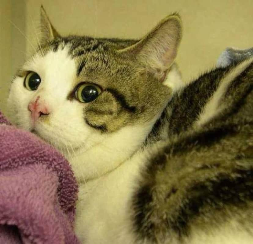 cat-1 [www.imagesplitter.net]