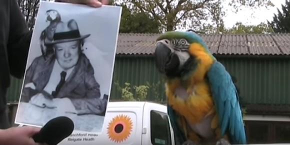 macaw3_e