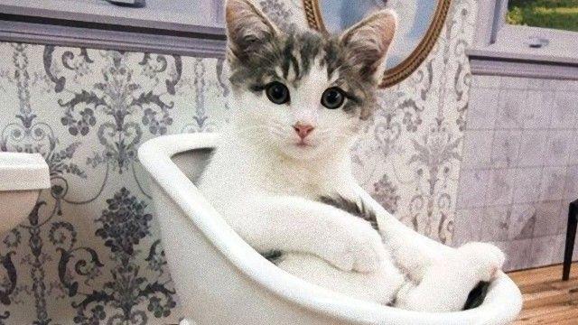 アイスランドの保護施設発。ドールハウスで暮らす子猫たちのライブ配信動画に癒される