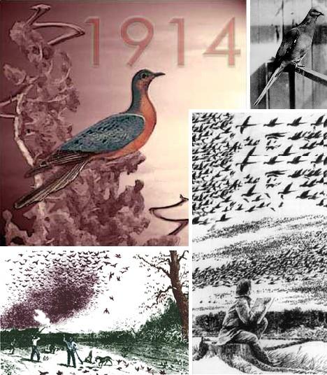animal_migrations_10b