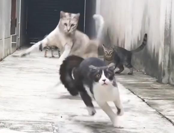 ニャンパラリンが加速する。4匹の野良猫たちの華麗なる忍者乱舞