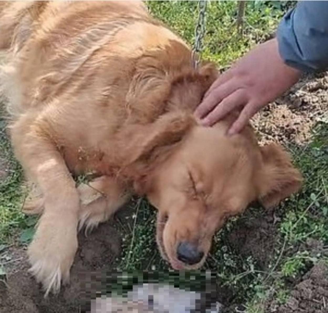 我が子の死が受け入れられず、墓に埋められた子を掘り起こそうとする母犬cover_e0