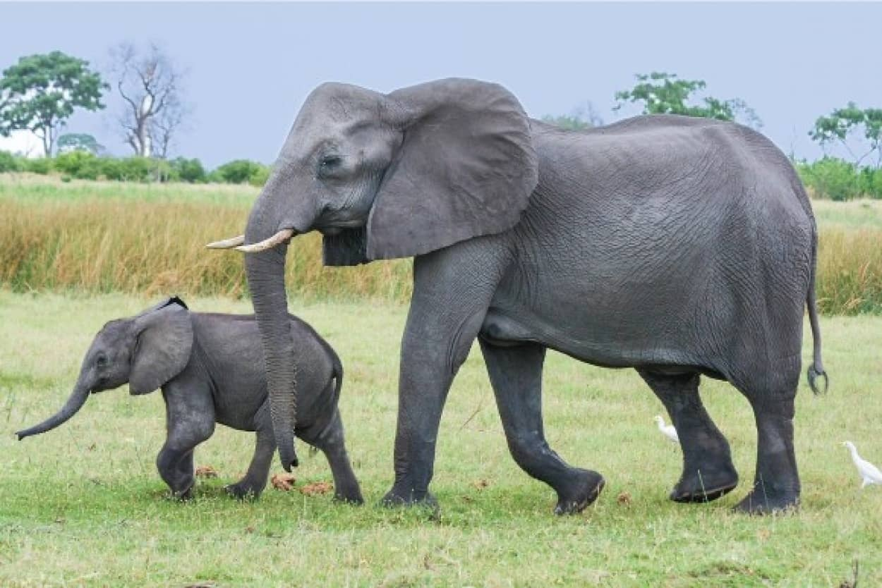 elephant_pixabay