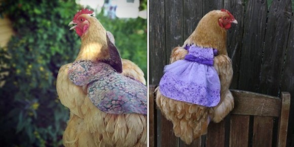 chiken3