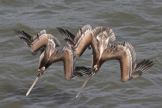 synchronized swimming animals 18