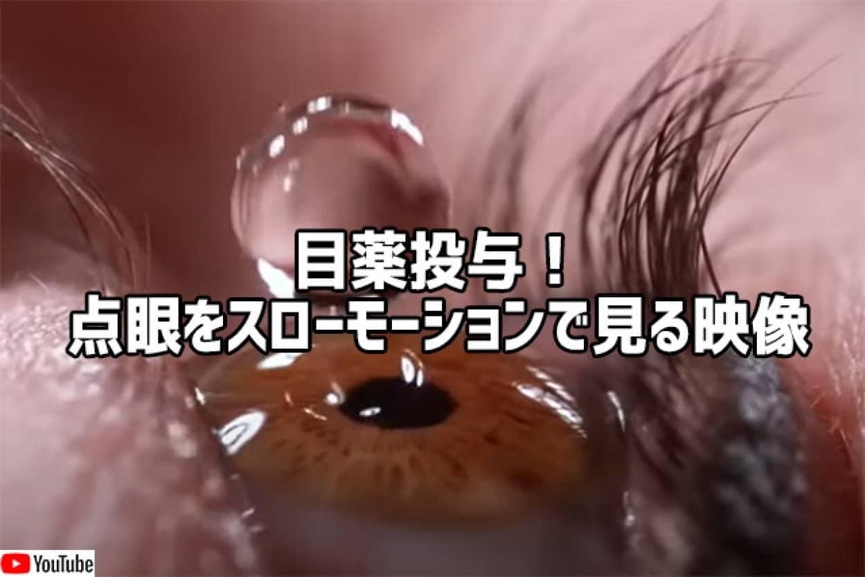 目薬投与!点眼の瞬間をスローモーションで