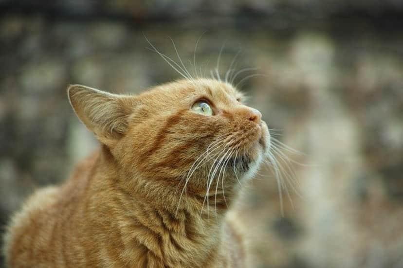 cat-2592570_640