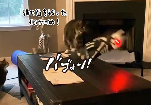こいつは敵だ!怪しい光を放つハロウィン仕様の猫をどつきまわす猫