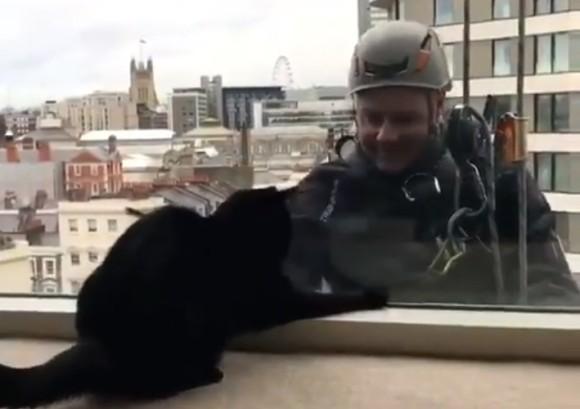 孤独な辛い作業が楽しくなる瞬間。高層ビルの窓清掃をしてたら猫が釣れた!