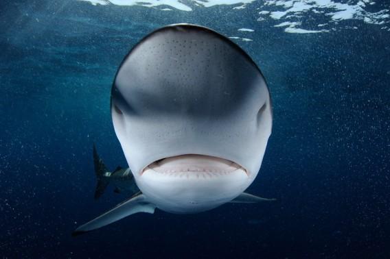 shark01_e