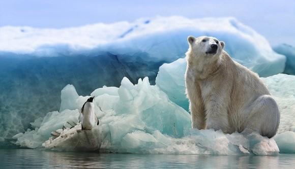 polar-bear-3277930_640_e