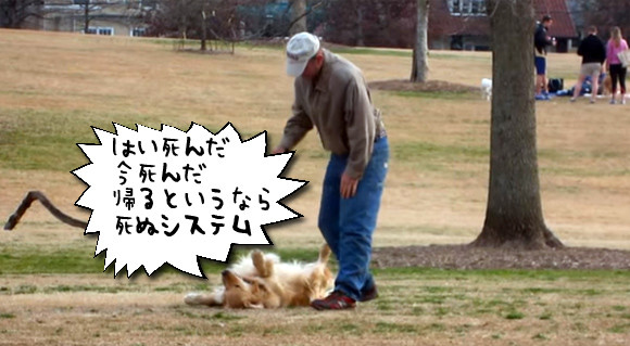 公園から帰りたくない犬の手口が巧妙だった。ザ・死んだふり