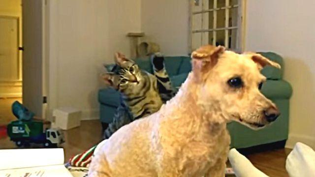 ちょ、だれやねん?別犬と化した散髪後の犬を見て戸惑う猫