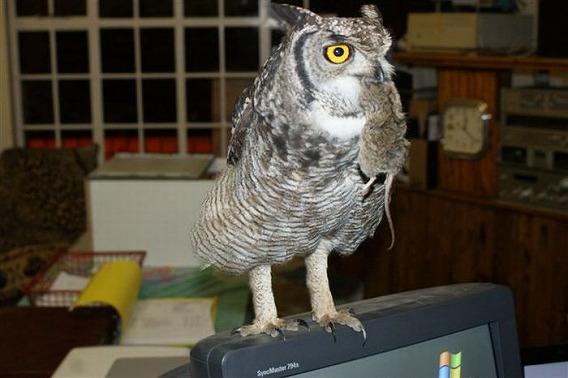 caring_owl_23