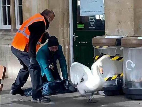 駅に進入した白鳥がゴネて駅員とひと悶着