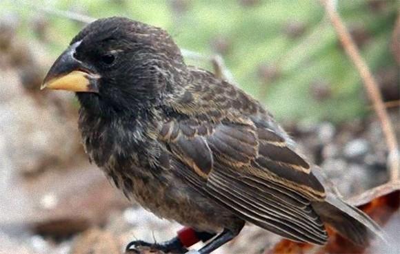 神秘のガラパゴス。わずか2世代で新種の鳥が誕生していた(米研究)
