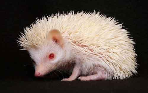 albino-22