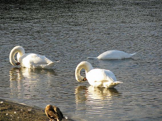 synchronized swimming animals 8