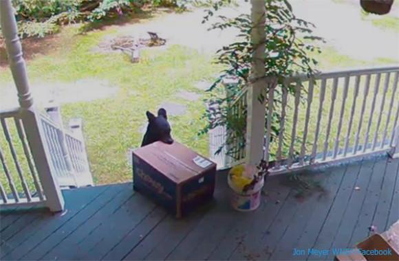 犯人はクマ!?玄関先の荷物を子グマが盗んでいく様子が監視カメラ映像にとらえられる(アメリカ)