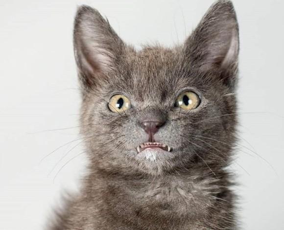 チェシャ猫みたいな愛くるしさ。唯一無二の笑顔で大人気となった過蓋咬合のある猫「ウォルフィ」の物語(アメリカ)
