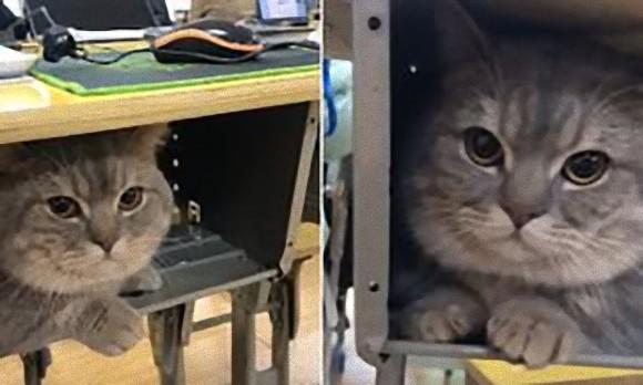 置いてくニャ!学校に行くのを阻止する猫にほだされ、連れてきた飼い主。猫は机の中で授業を受ける(中国)