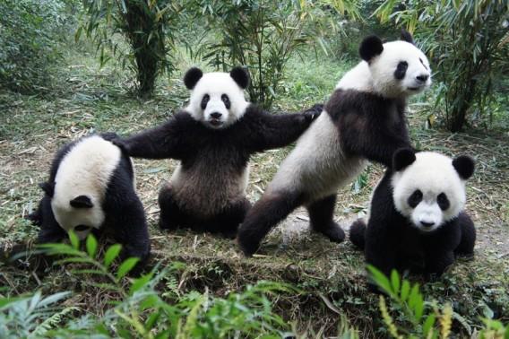 パンダ戦隊