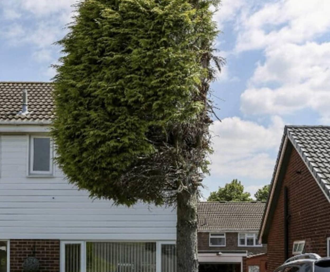 敷地内に侵入した木の枝に腹を立て真っ二つにした老夫婦