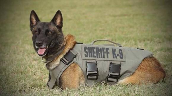 2度の銃弾を受けながらも犯人確保に尽力し、殉職してしまった警察犬(K9)の追悼式(アメリカ)