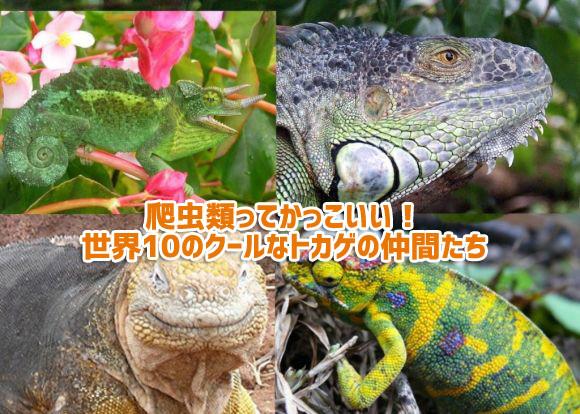爬虫類好き専用「かっこ良いのにかわいい。愛くるしい世界10のトカゲ図鑑