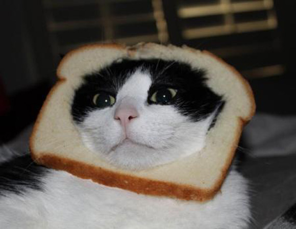 cat-bread-5