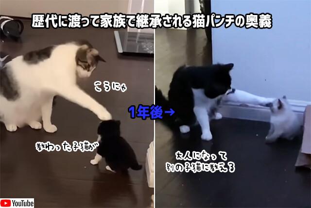 猫から子猫へ、子猫が大人になり別の子猫へ。猫パンチの奥義が継承されていく様子