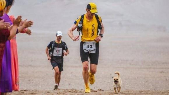 250kmの過酷なマラソンの中、1人のランナーの後をずっとついてきた小さな野良犬。最終ゴールはランナーの家に。