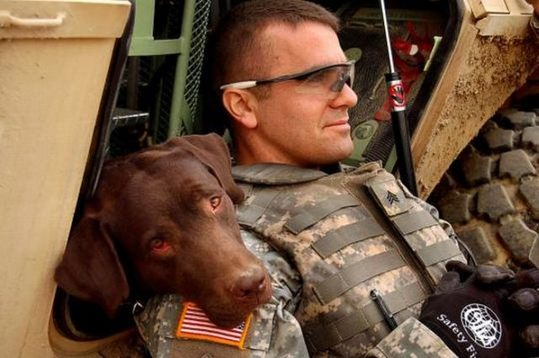 dogs_in_army_01