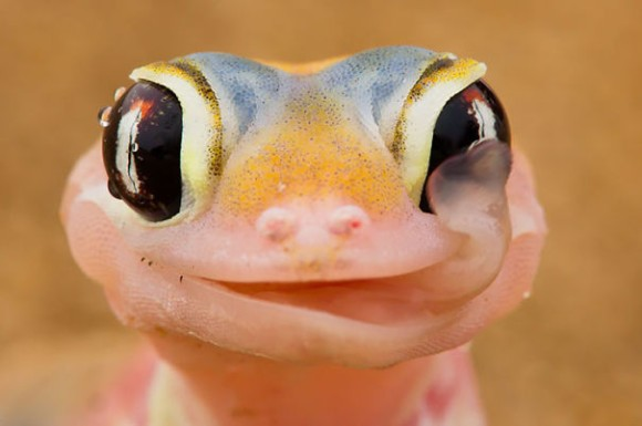 惚れてまうやろっ!笑顔がまぶしすぎ、かわいすぎる爬虫類の画像