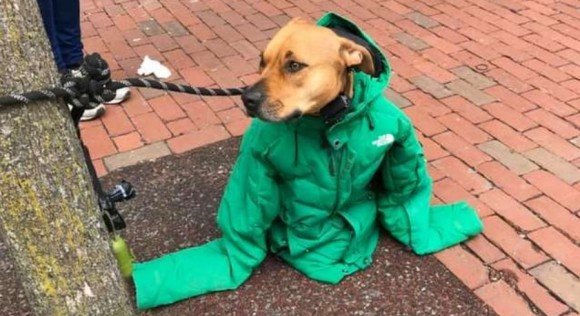 郵便局の前にいた犬はとても大きなジャケットを着ていた。それにはこんな暖かい事情があった(アメリカ)