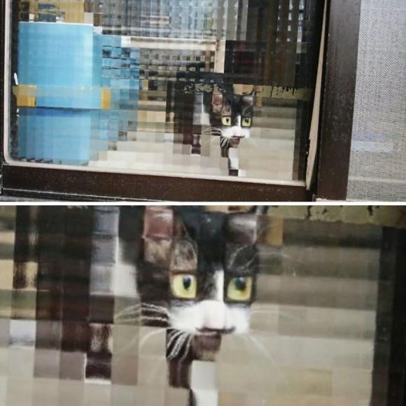 凸凹ガラスを通すと猫がピクセル化する。ドット絵みたいで癒されると海外で話題に