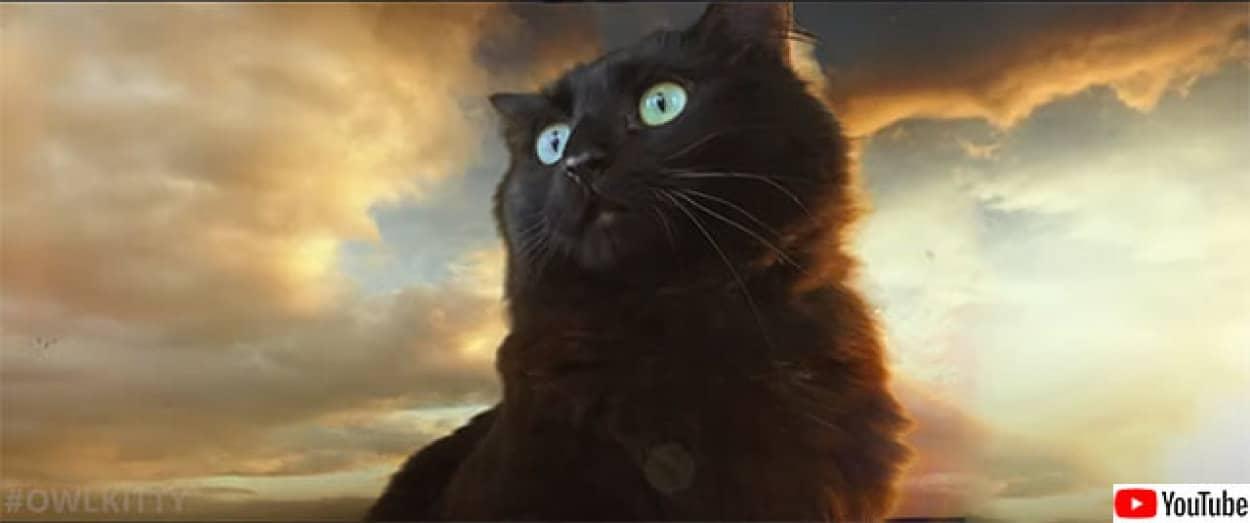 もしも猫がゴジラと戦ったら?パロティ動画『ゴジラvsオウルキティ』