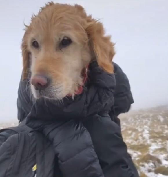 犬は助けたものの、規則違反で通報されたハイカー
