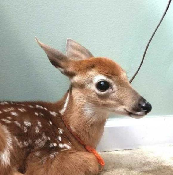 deer-3 [www.imagesplitter.net]