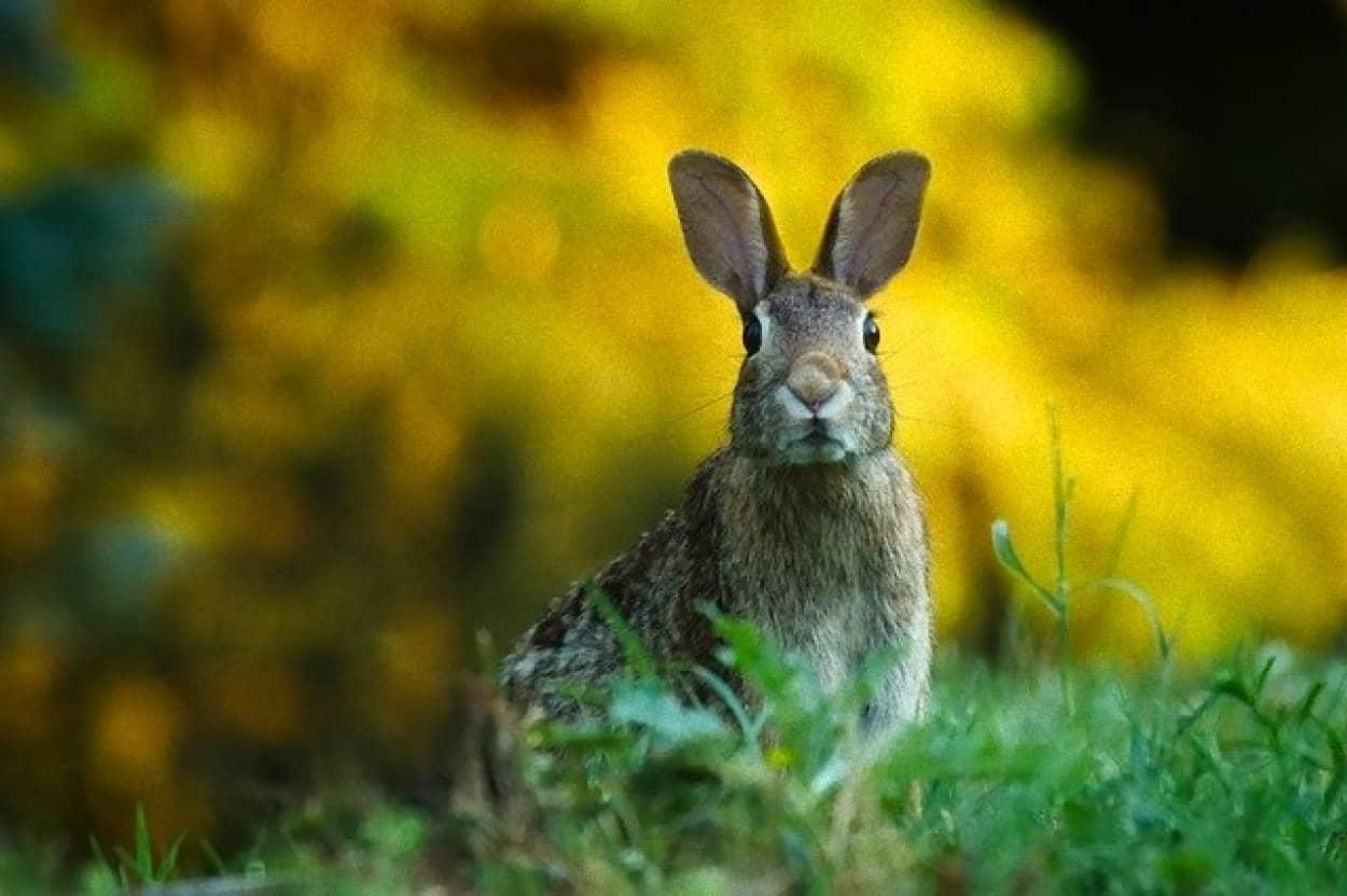 ウサギのウイルス感染症
