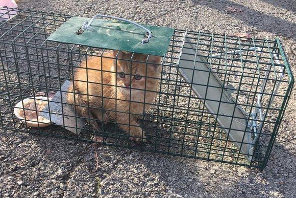 「人間さんお願い、うちの子を助けてください!」母猫の要請ではじまった子猫救出大作戦 (アメリカ)
