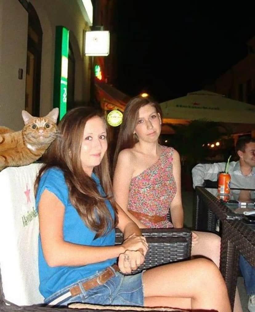 funny-cat-photobombs-14-58e23cb92fc57__605_e