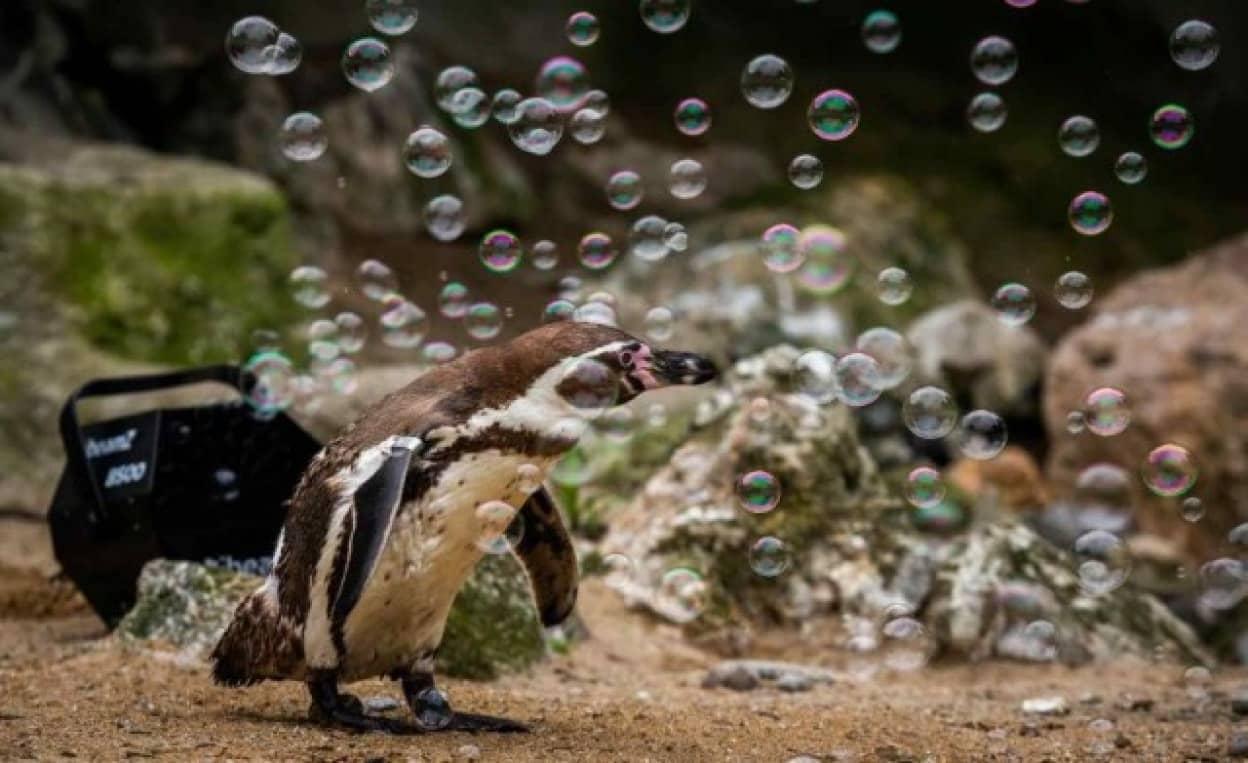 ペンギンのシャボン玉遊び