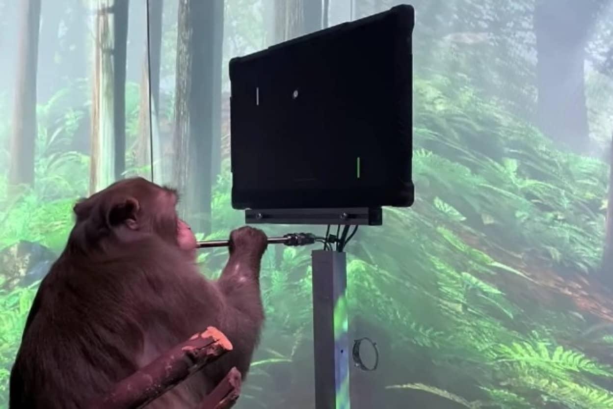 猿が手を使わずに思考だけでゲームをプレイ(ニューラリンク)
