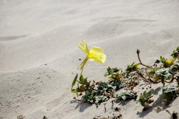 植物は、耳がなくても聞こえている。花びらでミツバチの羽が立てる音波を感知(イスラエル研究)